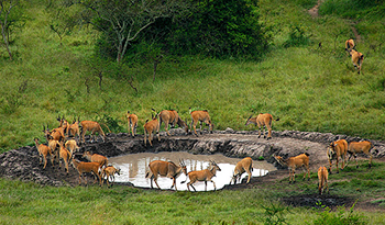Lake Mburo National Park Attractions